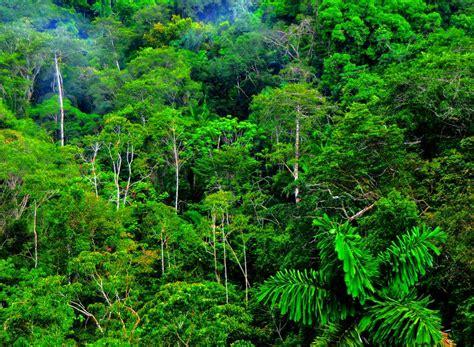 geography revision blog tropical equatorial rainforest