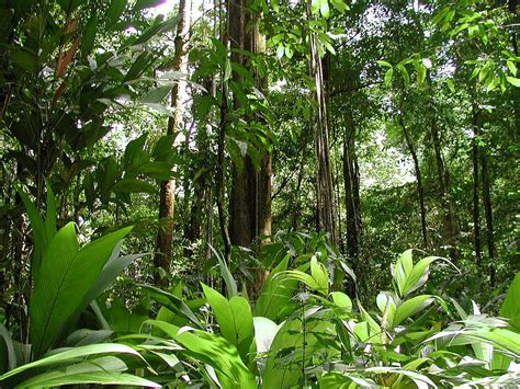 tropical rainforest climate facts biological science picture directory