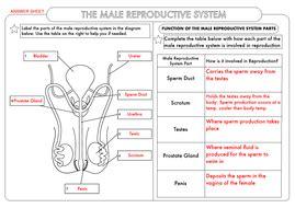 gcse biology human reproduction worksheet pack teaching resources