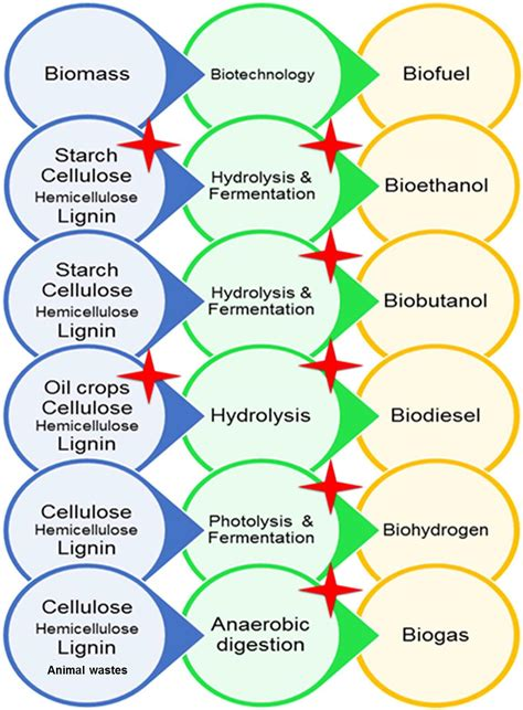frontiers halophiles vast potential biofuel production microbiology