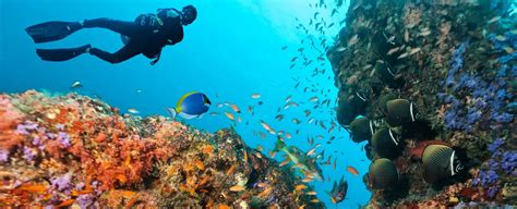 guide coral reef diving grand cayman residences grand