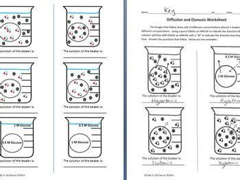 osmosis diffusion worksheet worksheets teaching biology diffuser