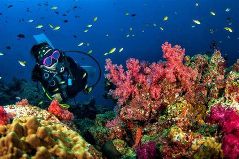 discover underwater yas island mask snorkel