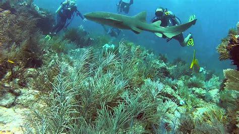 Miami Scuba Diving
