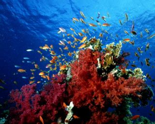 diving thailand dive world vacations