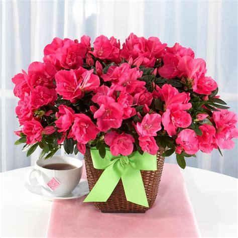 https google blankml pink azaleas