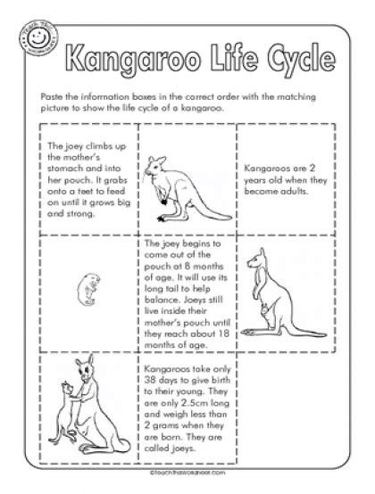 kangaroo life cycle interactive student notebooks grade 2