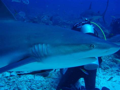 scuba diving roatan honduras bay islands honduras sun