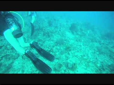 scuba diving west palm beach youtube