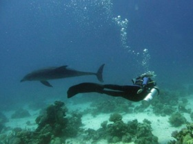 Meeresbiologie Kurs Juli 2009 in Hurghada