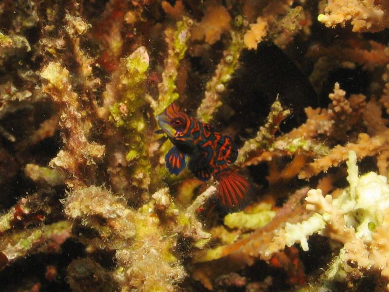 Reisebericht Tauchen Bohol Philippinen 2010