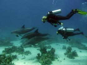 Anders tauchen – Delfin als Vorbild