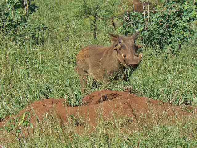 Reisebericht Mosambik mit Krüger-Nationalpark