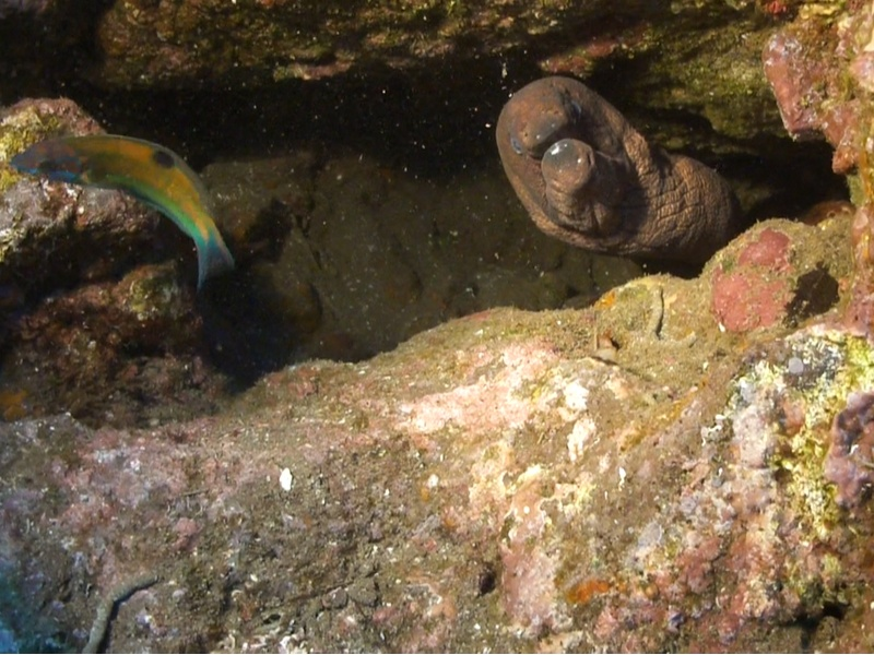 Madeira Canico de Baixo, Tauchen, Esmeralda