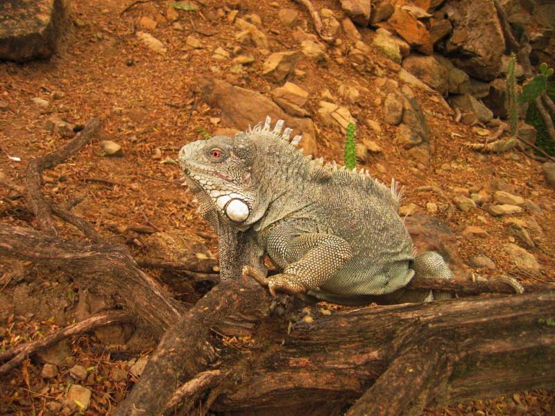 Reisebericht Tauchen Curacao und Bonaire 2009