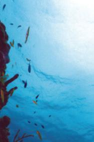 Reefview