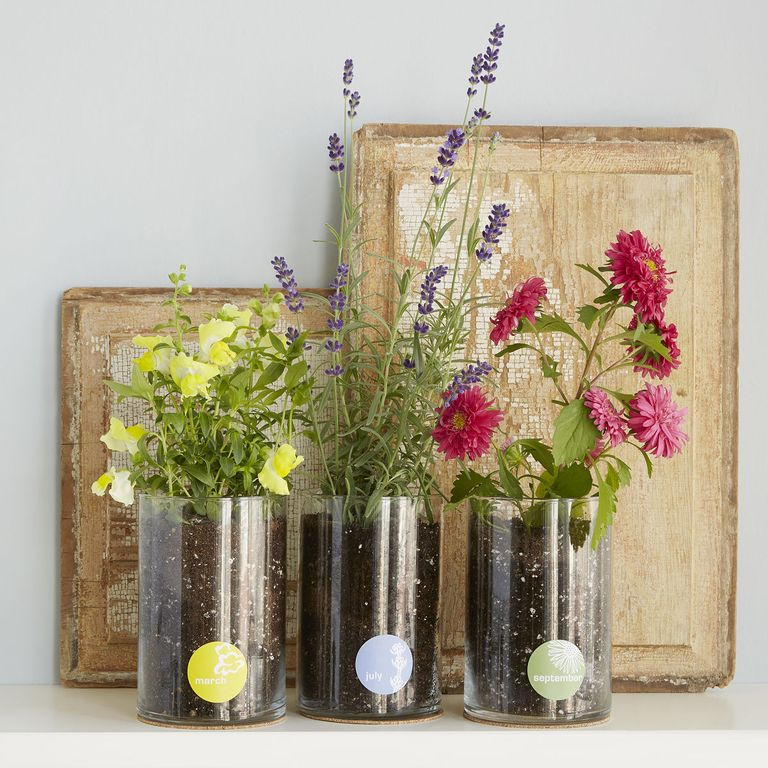 gift for mom Birth Month flower Grow Kit
