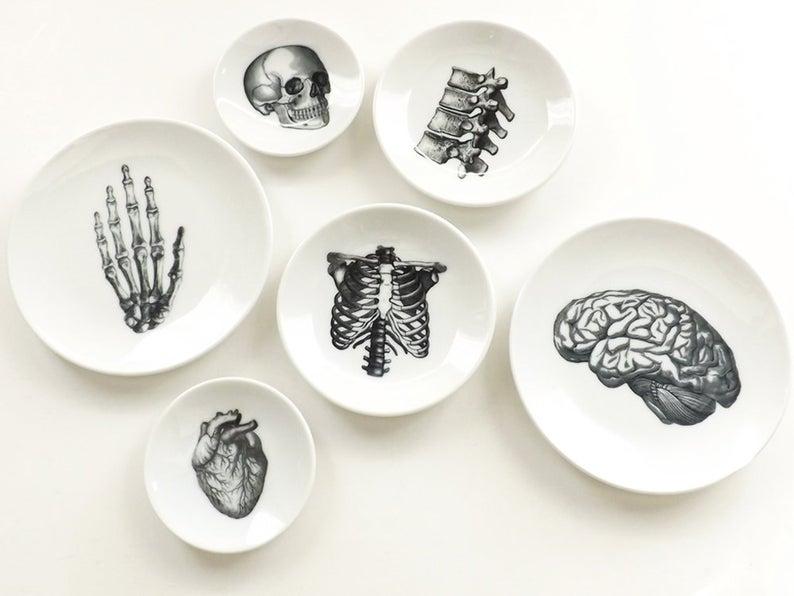 Anatomy Dishes- best Halloween gift 2021