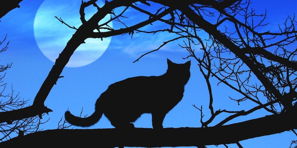 Want to know why are Black cats associated with Halloween?