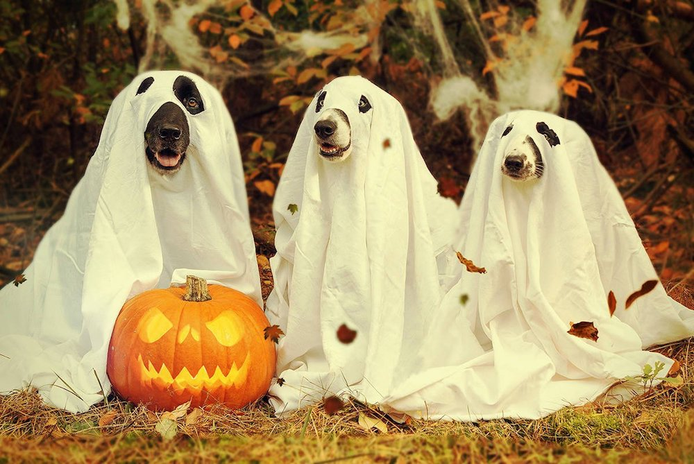 What are funny quotes on Halloween
