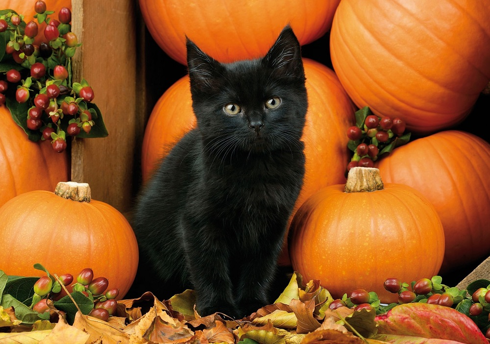How to keep your cat safe at Halloween