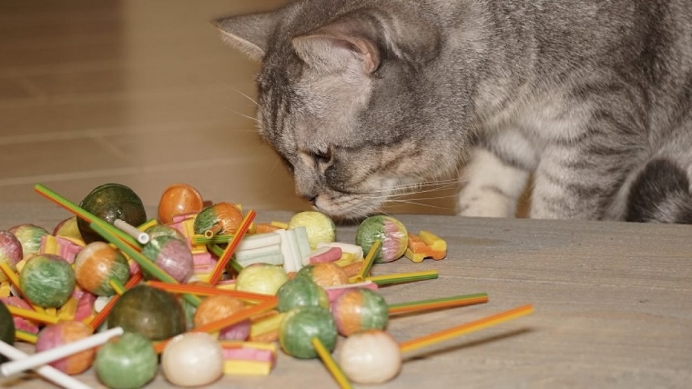 How to keep your cat safe at Halloween - keep candy out of its reach