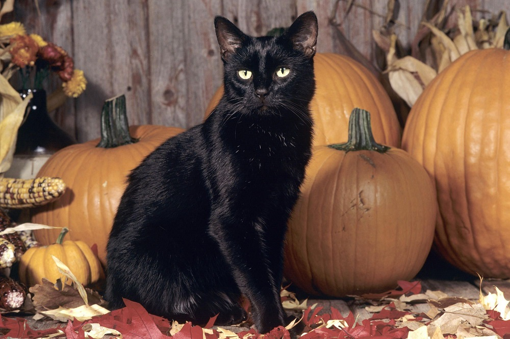 How to keep your cat safe at Halloween - Design safe home decor for cat