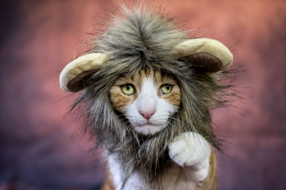 How to keep your cat safe at Halloween - choose the right costumes for it