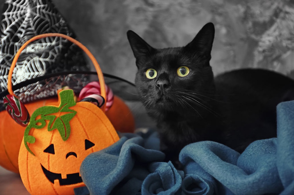 How To Keep Your Cat Safe At Halloween?