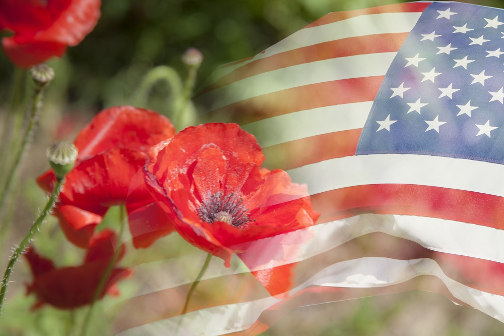 What Flower Is A Symbol Of Veterans Day