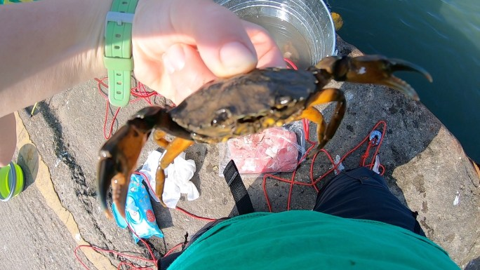 A crab held up to the camera, pincers at the ready!