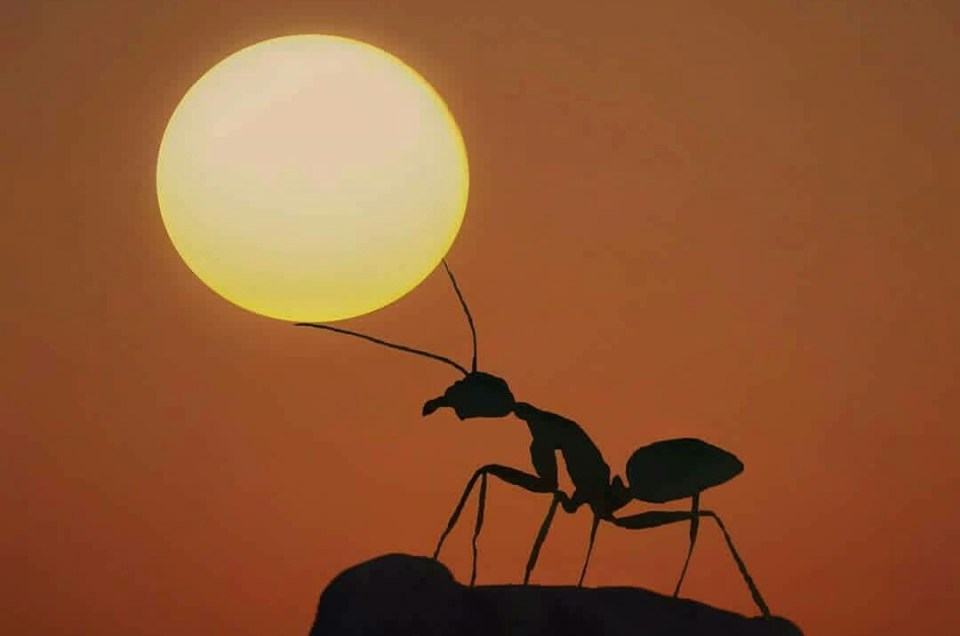 Wisdom From The Ants; Time Is A Currency