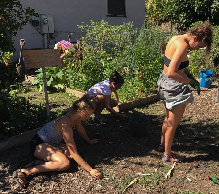 Three women work in a garden