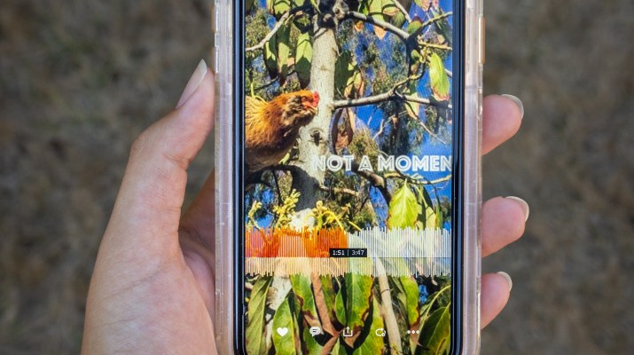 "A person holds an iPhone that displays an albumn cover. The album cove image is of a chicken roosting in a tree and text over the top reads ""Not a Moment too Soon: Back to Plan A."""