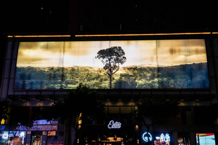 A billboard with a photo of a tree in a forest is on a building.