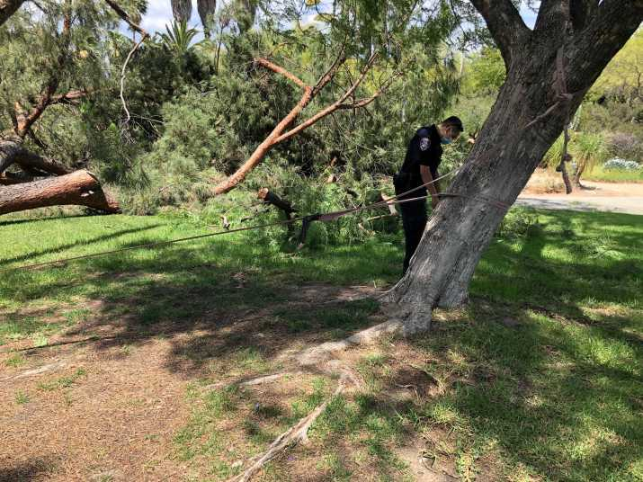 Campus Safety officers inspect a slack line under the toppled pine tree