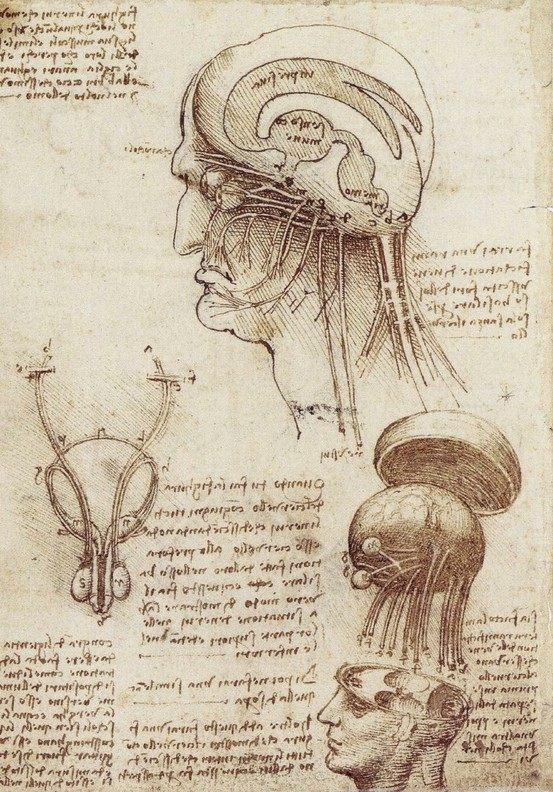 Leonardo da Vinci, Composite Rendition of the Brain and Cranial Nerves.