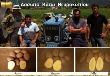 Οι πατατοπαραγωγοί Δασωτού Κάτω Νευροκοπίου, δηλώνουν τη διάθεση πατάτας και φασολιών χωρίς μεσάζοντες.