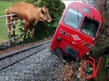 ΦΘΙΩΤΙΔΑ: Τρένο τράκαρε με αγελάδα και εκτροχιάστηκε!!!