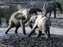 Παλεύουν πάλι οι ελέφαντες στα πανευρωπαϊκά βοθρολύματα….