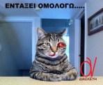 Συνελήφθηκε και ο γάτος του Δημήτρη Μπουρζούκου, μετά από άγρια καταδίωξη από κεραμίδι σε κεραμίδι!!!