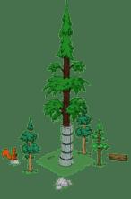 redwoodlevel4