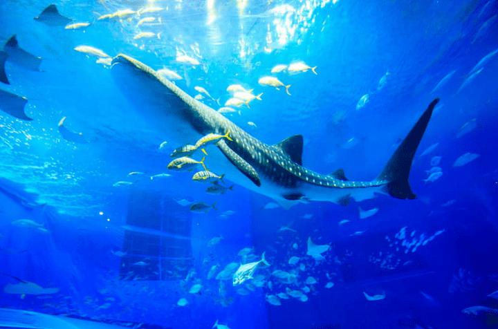 美ら海水族館 割引 ローソン 当日