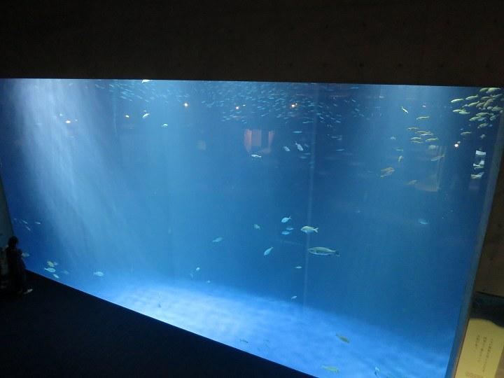 四国水族館 オープン