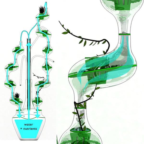 都市型水耕栽培3