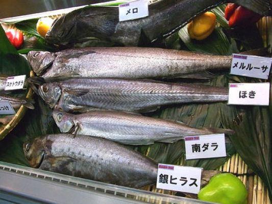「ホキ 魚」の画像検索結果