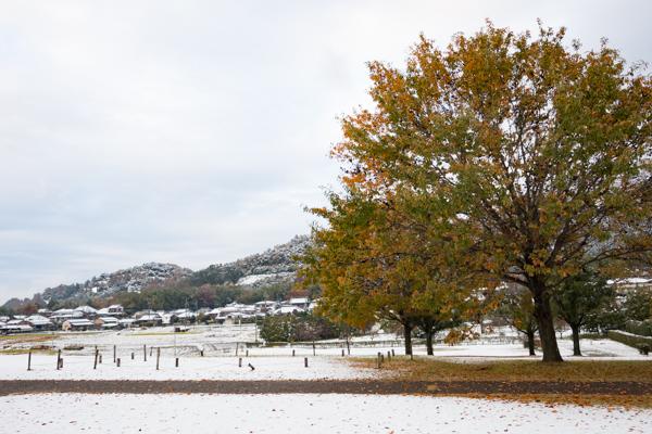 snow-1-2