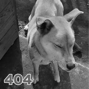 404エラー犬のモモ