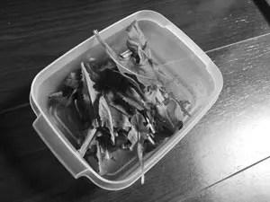 マンションバルコニー栽培ガーデニングレタス収穫