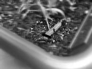 蛾の幼虫ガーデニング